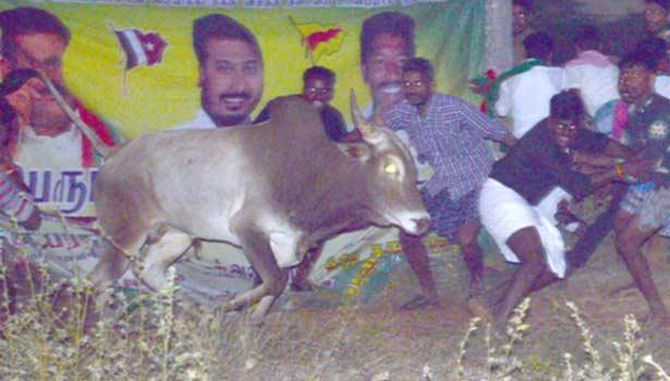 201701151249557727_Madurai-Dindigul-Nagapattinam-jallikattu-defiance_SECVPF