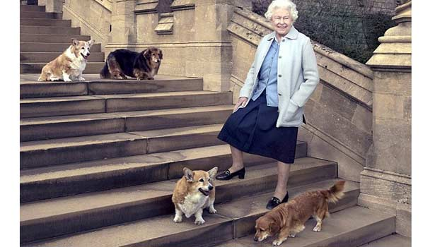 201707211113111127_Queen-Elizabeth-walking-when-dog-adopted_SECVPF