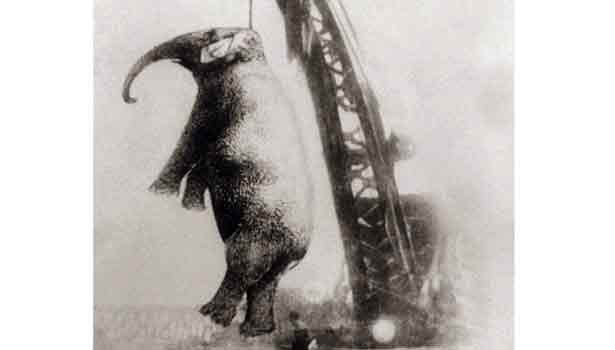 201709201823544712_Murderous-Mary-the-elephant-that-was-hanged-for-murder_SECVPF