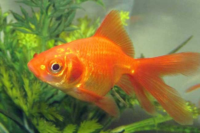 1523177101-new-fish-to-tank-L